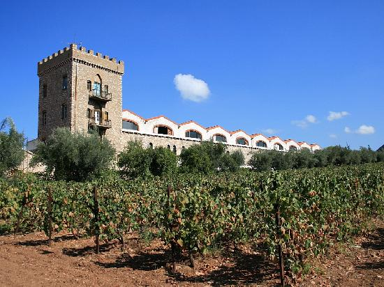 wine-factory